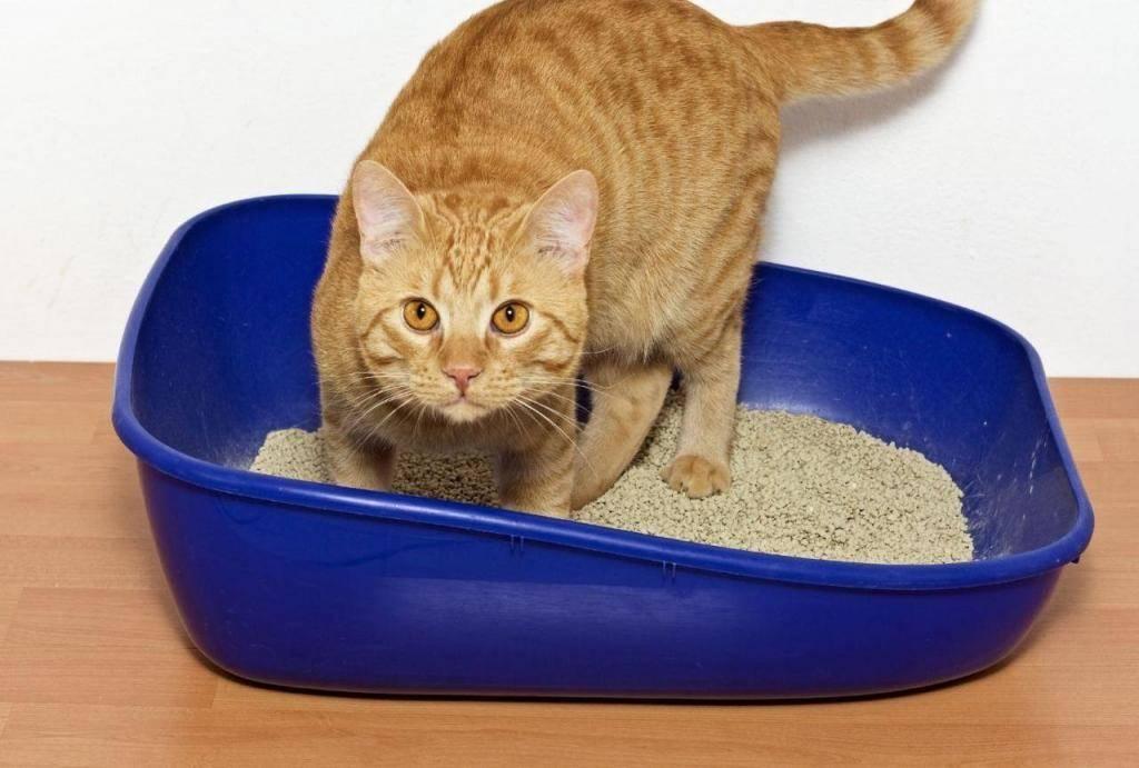 Когда котята сами начинают есть и ходить в туалет самостоятельно, как часто они какают и писают?