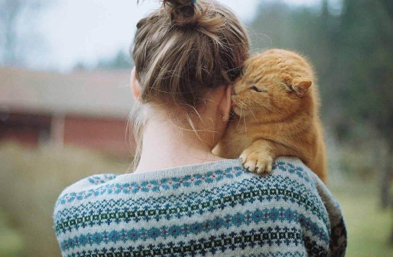 Любят ли нас кошки: научные исследования, умеют ли коты любить своих хозяев