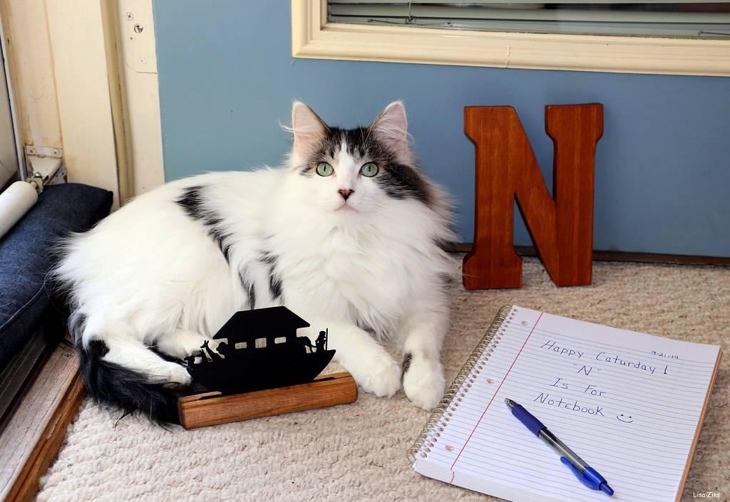 10 самых умных пород кошек с фото