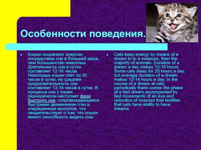 Сколько времени спит кошка в сутки - норма для взрослых и котят