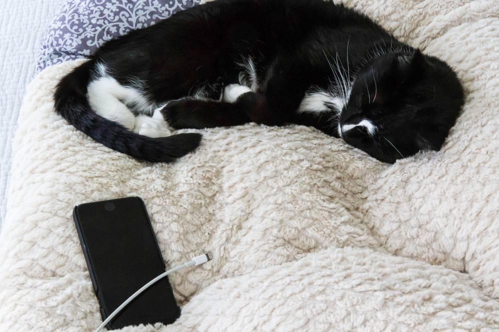 Как отучить кошку писать на диван: что делать