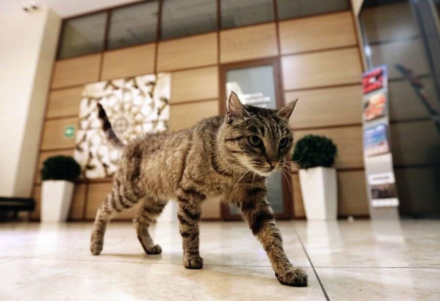 Почему кошка шипит на человека? ответы эксперта