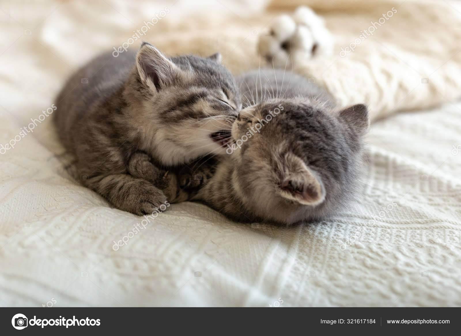 Кошки и новорождённый ребёнок.
