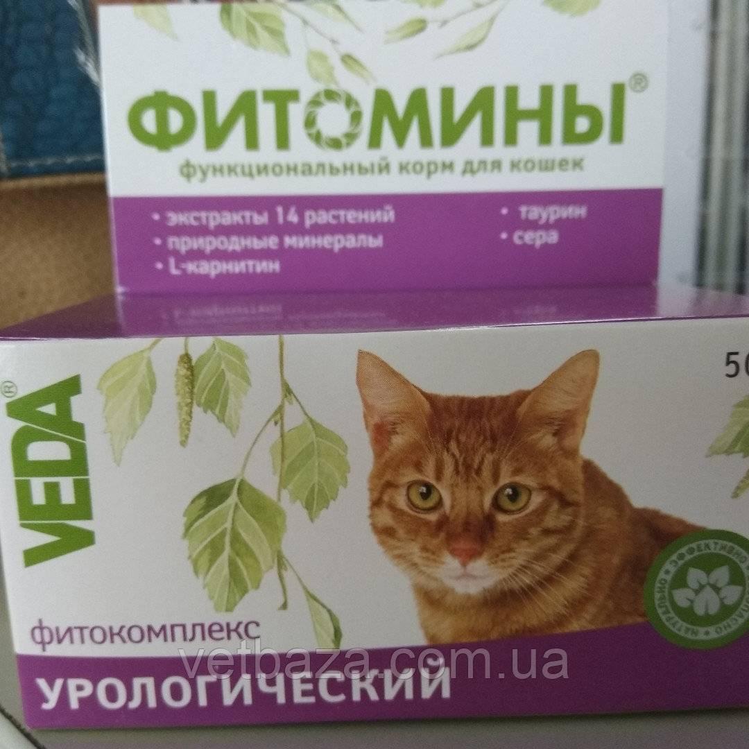 Пробиотики для кошек: перечень препаратов. корм для кошек с пробиотиками
