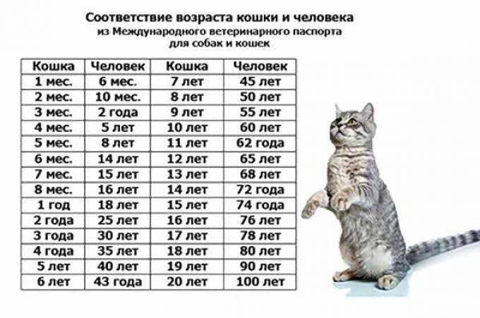 Как определить возраст кошки, соотношение возраста кошки и человека, таблица возраста кошек, определение возраста по зубам   кошки - кто они?