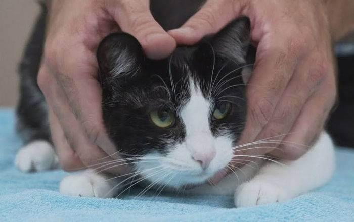 С любимым котейкой на поводке: нужно ли выгуливать кошек?