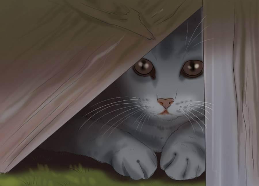Как найти пропавшую кошку?