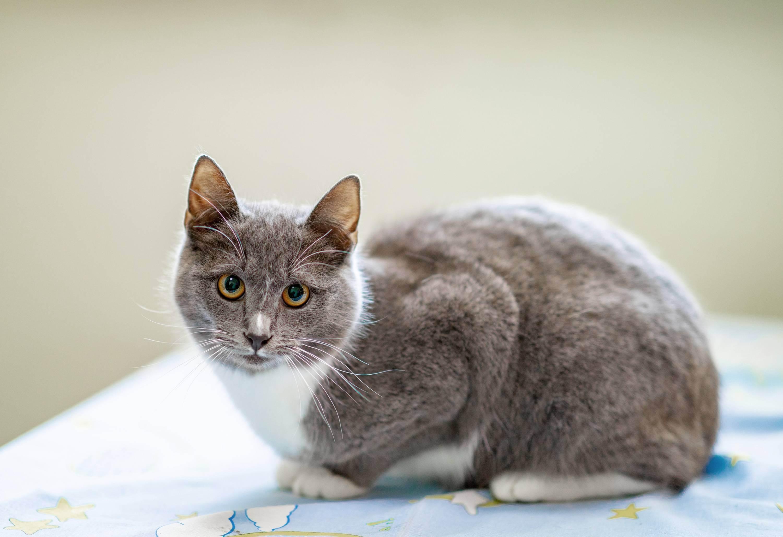Какие каши можно давать кошкам: обзор популярных круп, их характеристика и полезность