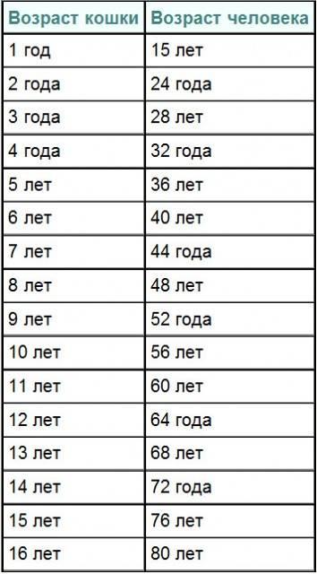 Определяем возраст кошки по человеческим меркам, используя таблицу