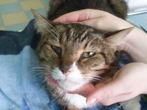 Чем лечить почечную недостаточность у кошек