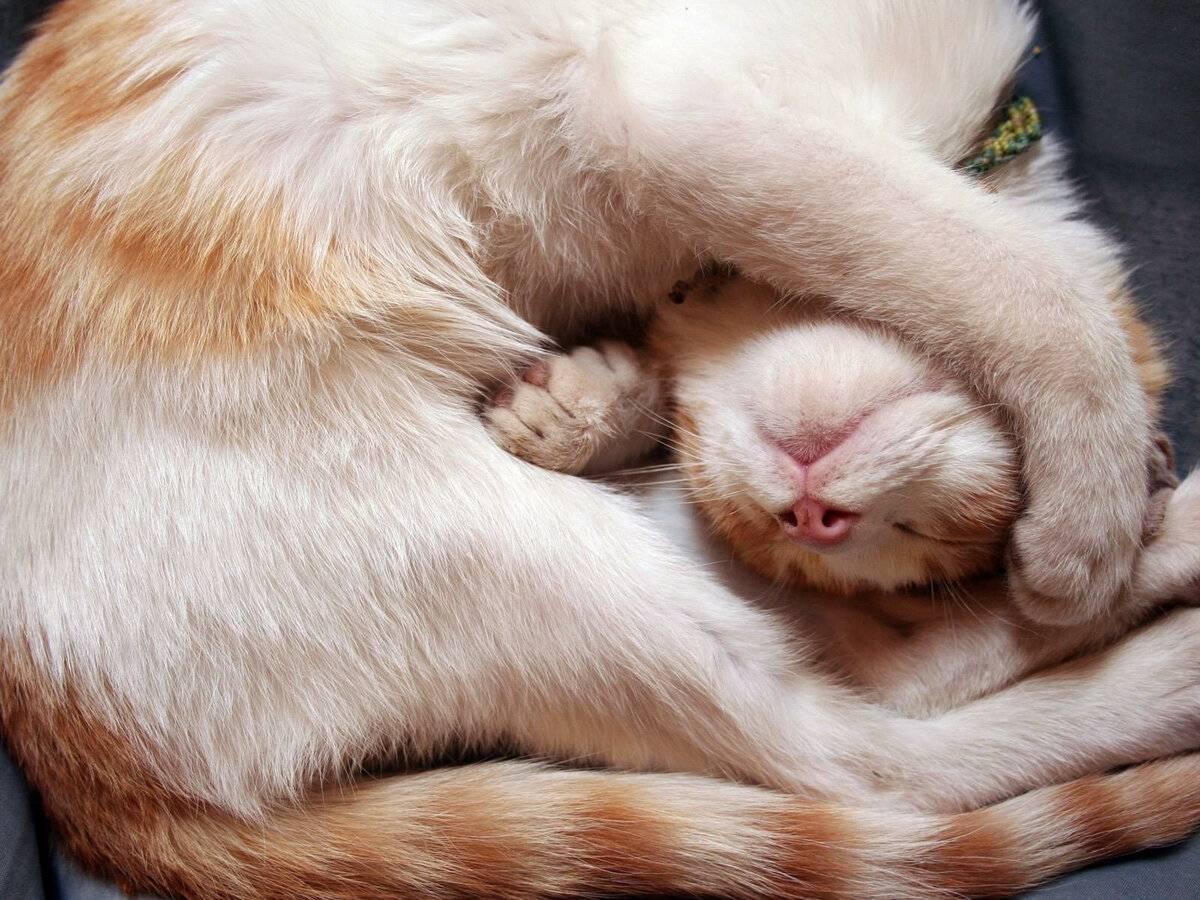 Сонник кошка орёт. к чему снится кошка орёт видеть во сне - сонник дома солнца