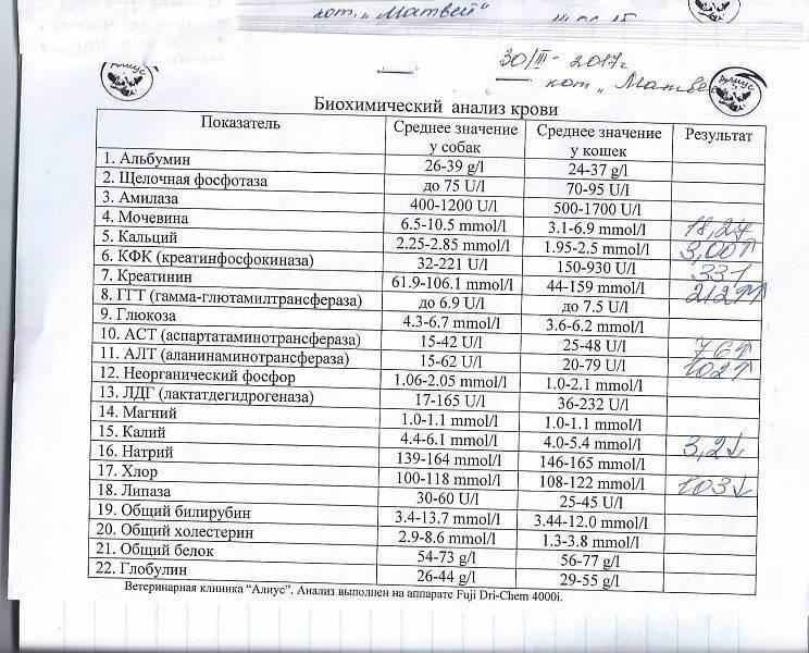 Анализ крови у кошек норма расшифровка общего и биохимического анализа