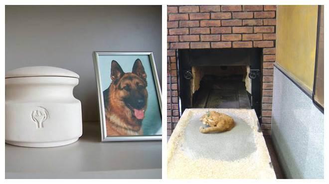 Кремация животных, общая, индивидуальная кремация кошек и собак