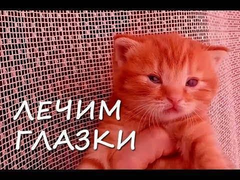 У котенка гноятся глаза: причины, что делать
