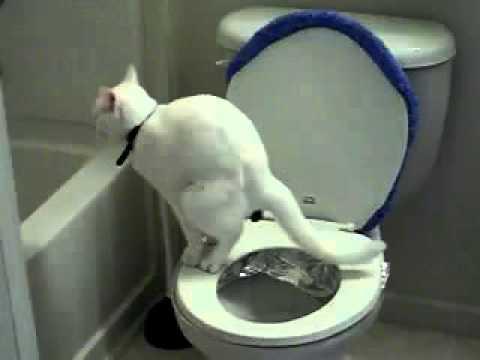 С какой частотой котятам необходимо ходить в туалет: количество раз в день