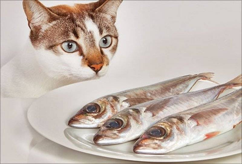 Почему кастрированным котам нельзя рыбу
