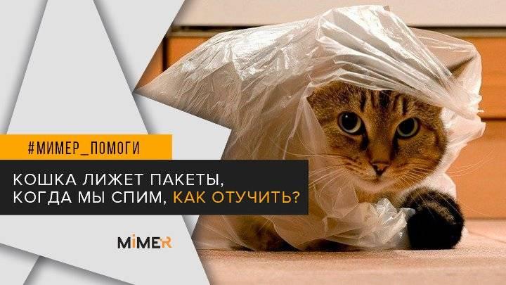 Что делать, если кот лижет пакеты?