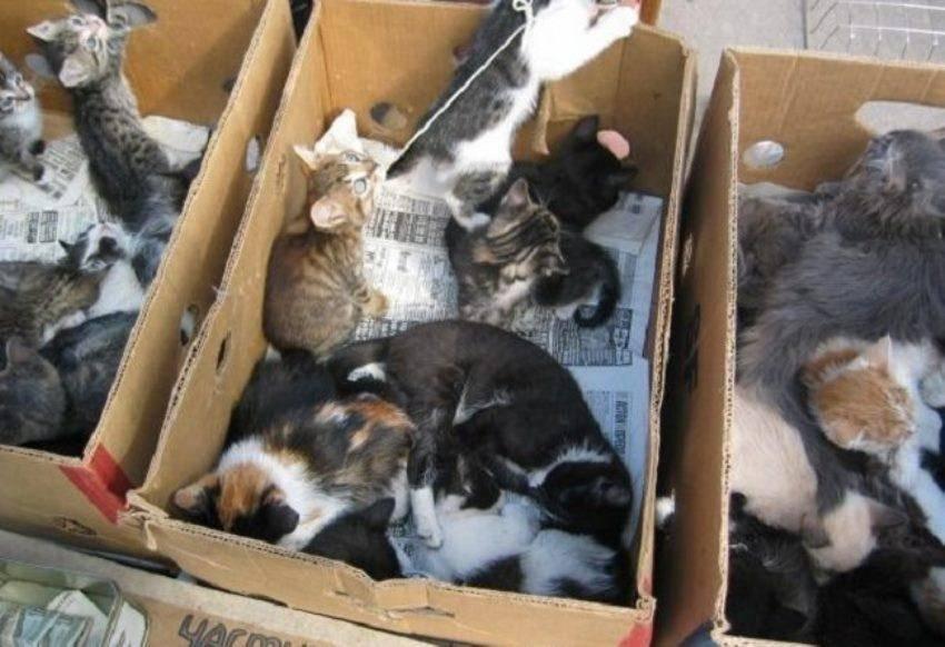 Куда отдать кошку, если она не нужна: приют и другие варианты