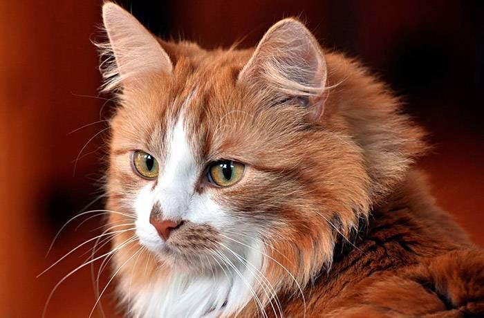 Успокоение во время стрижки - какое успокоительное дать коту перед стрижкой - запись пользователя //надя// (gunyanya) в сообществе домашние животные в категории помогите советом - babyblog.ru