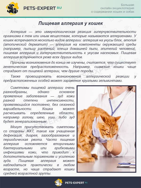 Аллергия на кошек: способы борьбы