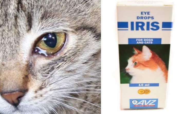 Бриллиантовые глаза — капли для кошек