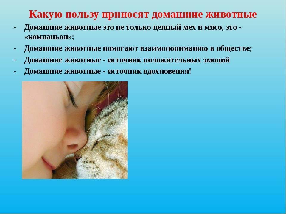 Чем полезны кошки для человека - психологическая польза - kotiko.ru
