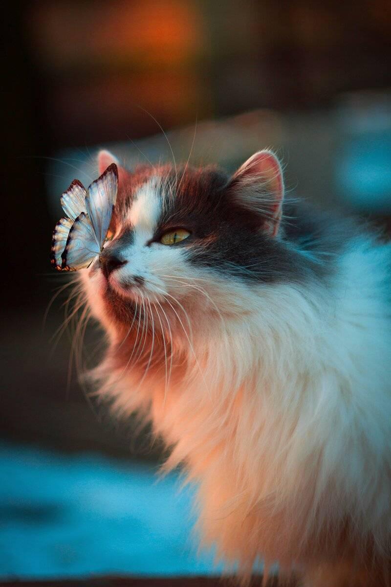 Котёнок писает в угол - как отучить котенка ссать по углам - запись пользователя тигруша (myrena2010) в сообществе домашние животные в категории помогите советом - babyblog.ru