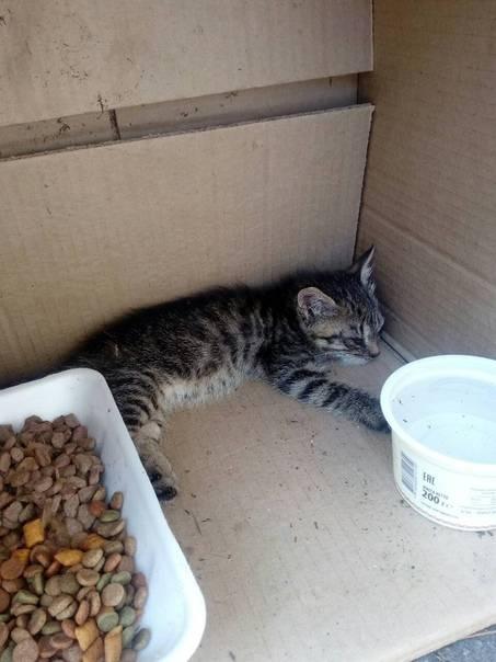 Приют для кошек: что это, куда отдать животное, если оно стало не нужно, как взять домой котенка из передержки, правила и особенности