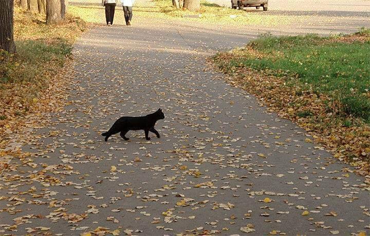 Существующие приметы про кошек