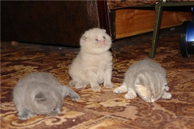 Как долго кошка вынашивает котят: через сколько дней живот самки увеличивается