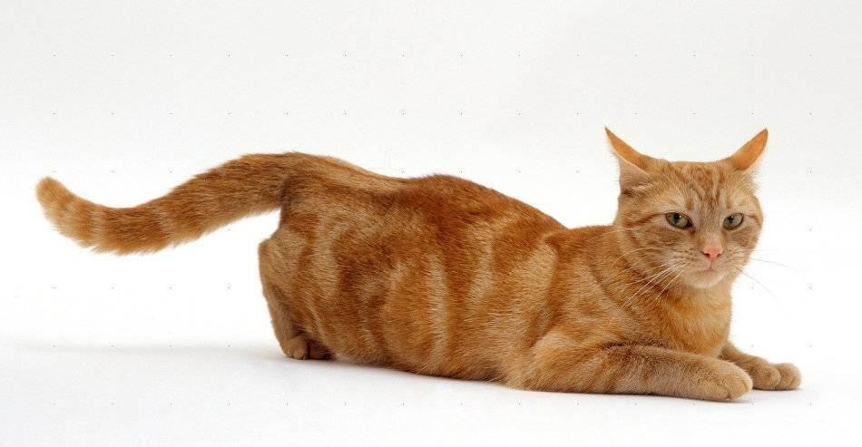 Можно ли мыть кота дегтярным мылом от блох