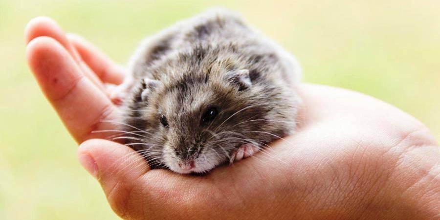 Вызов ветеринара на дом в калуге