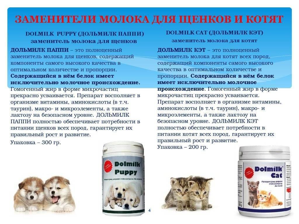 Заменитель кошачьего молока в домашних условиях: излагаем суть