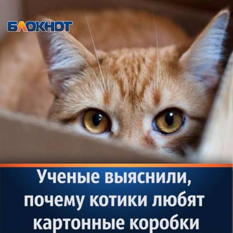 Учёные рассказали, почему коты так сильно любят коробки