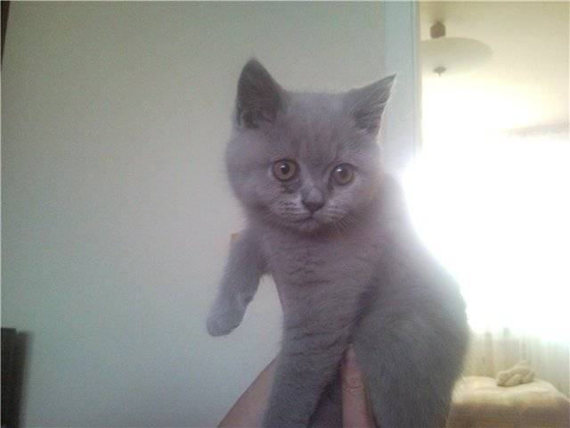 У кошки слезятся глаза – норма или патология, что делать в домашних условиях