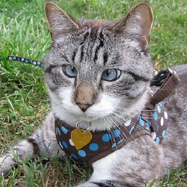 Почему у шотландского котенка косые глаза  