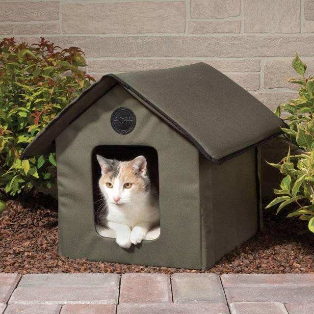 Как адаптировать кота к новому дому: с чего начать, что необходимо котёнку на другом месте жительства