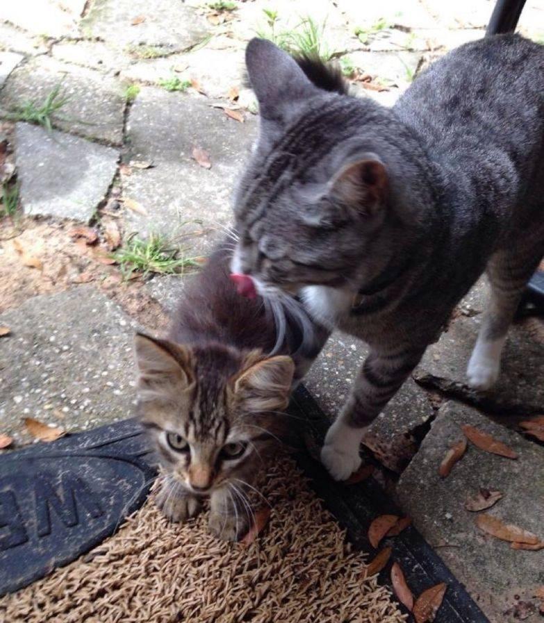 Почему мамы-кошки таскают своих котят в зубах