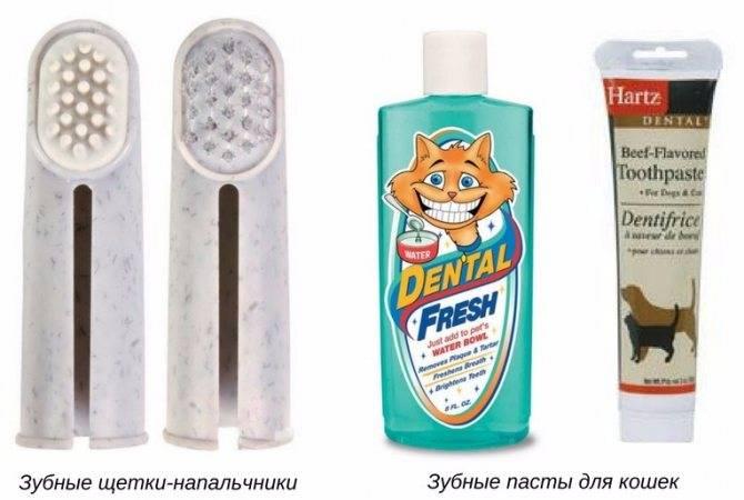 Сколько зубов у взрослой кошки и кота, как их почистить в домашних условиях, в том числе, чем чистить от образования зубного камня