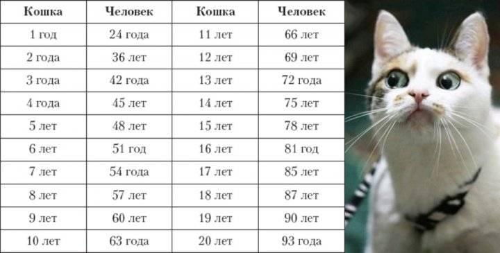 Сколько живут кошки | животный мир