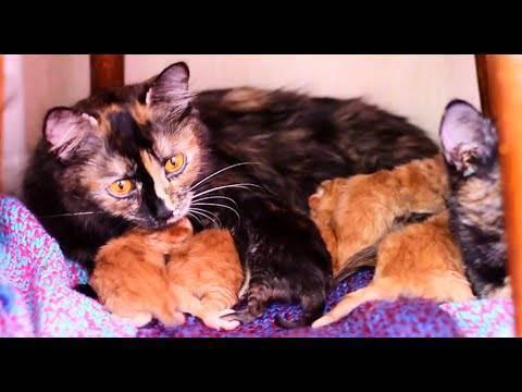 Как принимать роды у кошки в домашних условиях: как принять, если она рожает первый раз, что нужно делать и как помочь животному