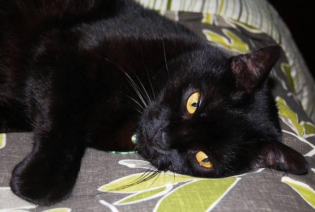 Что будет с котом, если он съест отравленную мышь, что делать в домашних условиях?