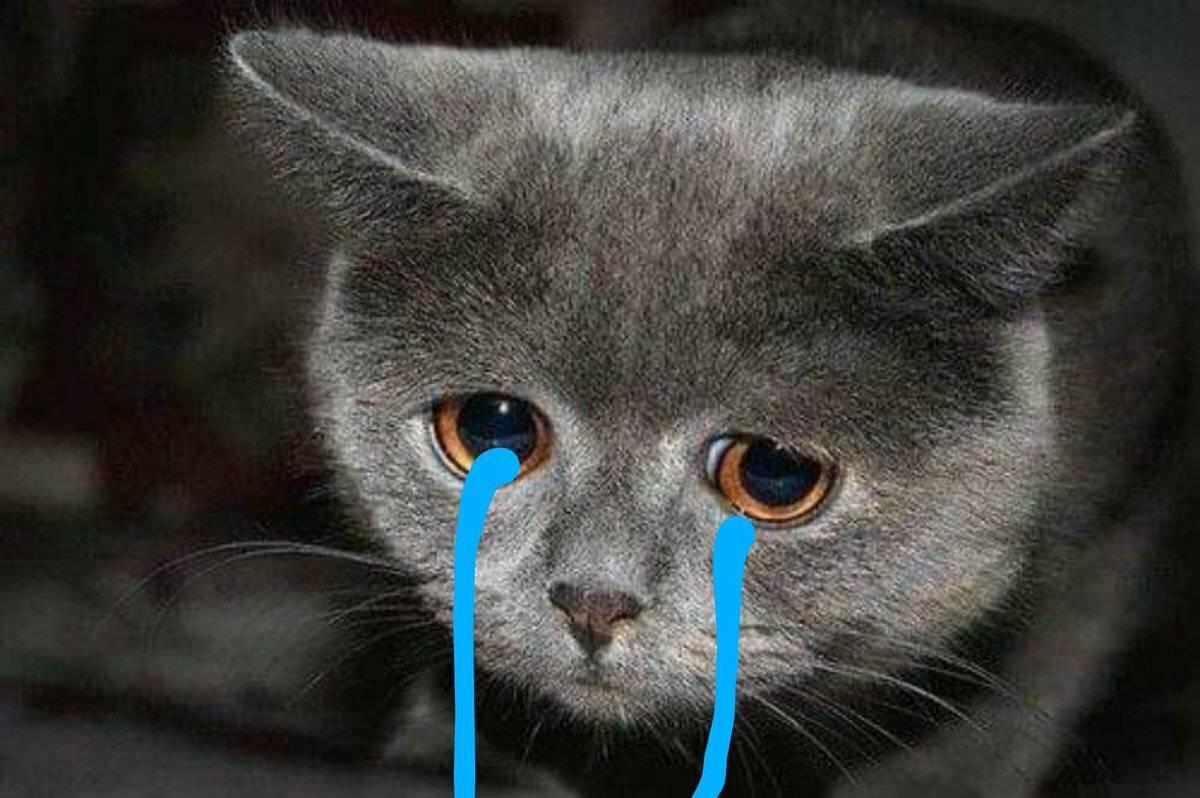 Могут ли кошки плакать реальными слезами боли или печали?