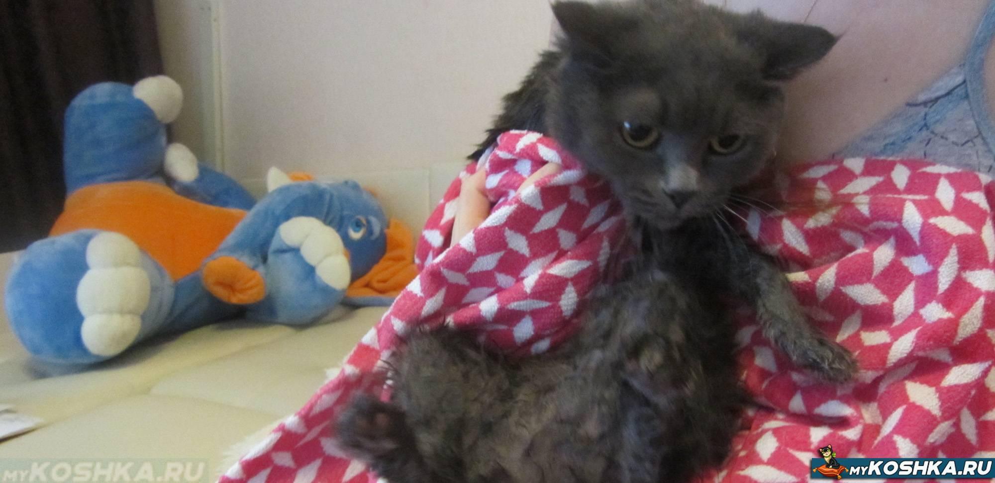 Кошка просит кота как её успокоить в домашних условиях: средства