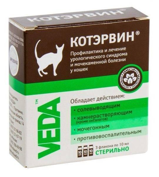 ᐉ канефрон для кошек: дозировка, инструкция по применению - kcc-zoo.ru