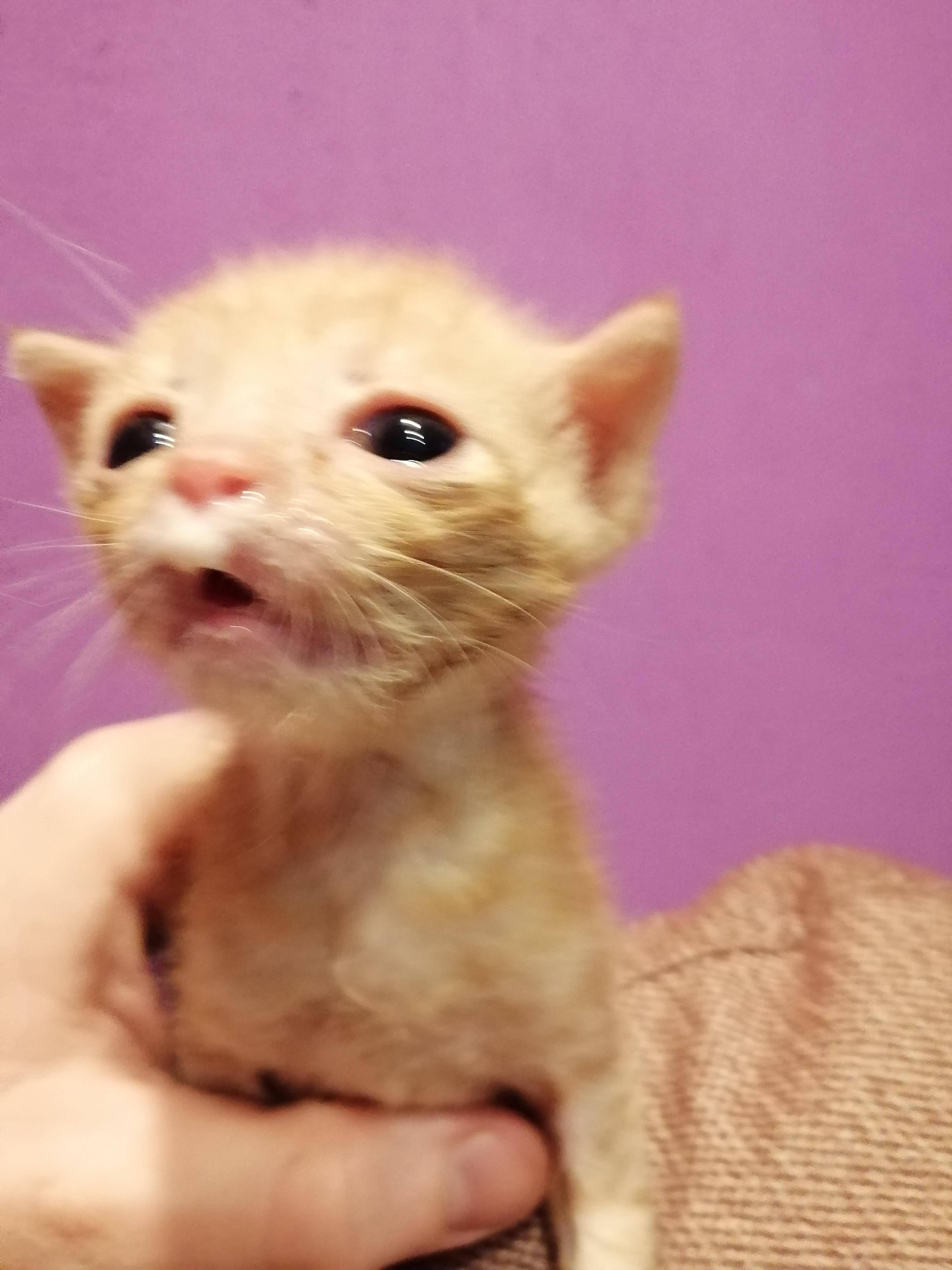 Почему кошки чихают?