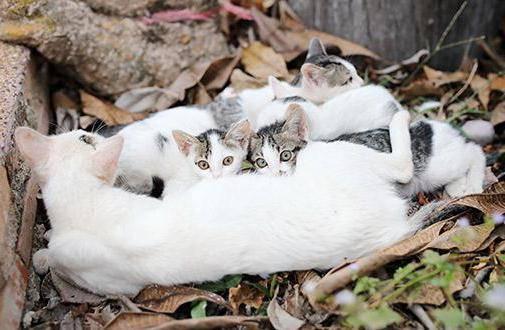 Когда котят можно забирать от кошки?