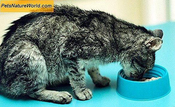 Почечная недостаточность у кошек: симптомы, лечение, прогноз для жизни животного