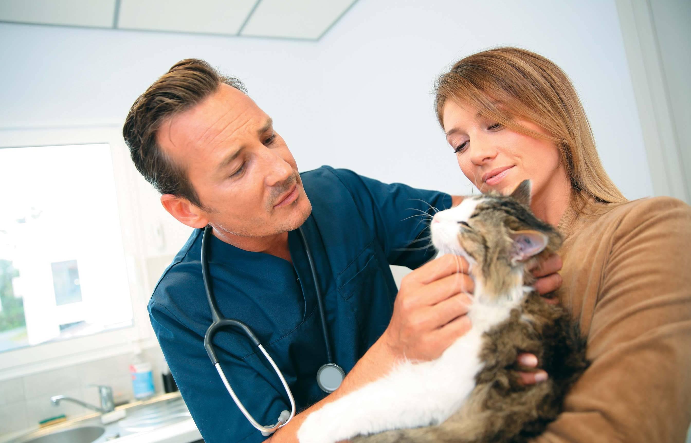 Нужно ли кастрировать домашнего кота, если он не выходит на улицу из квартиры: мнение ветеринара