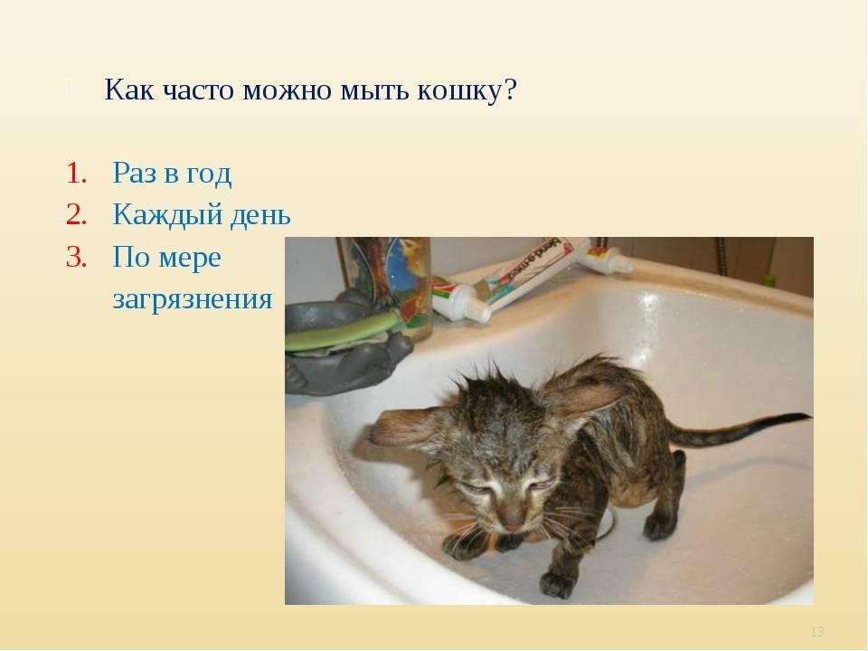 Как помыть кота: правильная организация процедуры, аксессуары